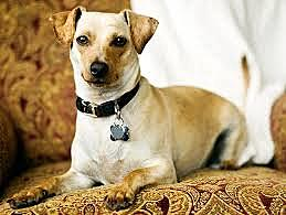 Adopted a dog
