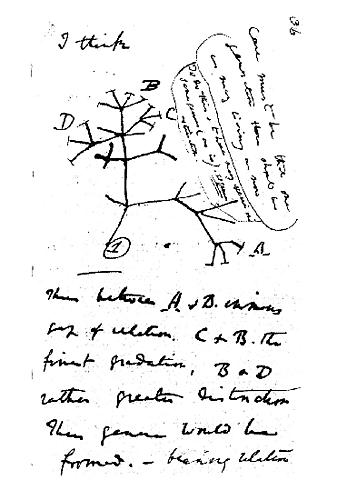 Inicio de la teoría de la evolución