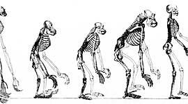Vida y obra de Charles Darwin timeline