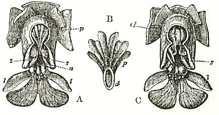 Publicación de la fecundación de las orquídeas