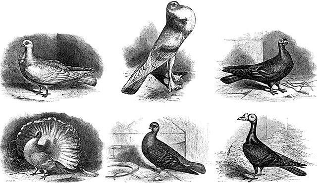Publicación de  Variación de las plantas y los animales en estado doméstico