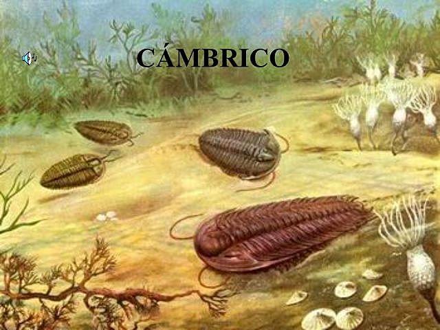 Período Cámbrico (Era Paleozoica)