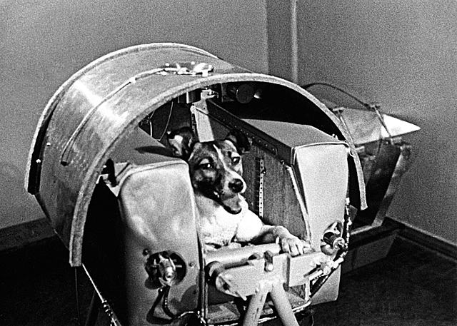 Laika, Space's First Occupant.