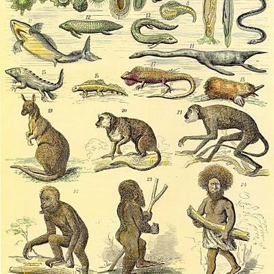 Teorías sobre el orígen de la vida y su evolución timeline