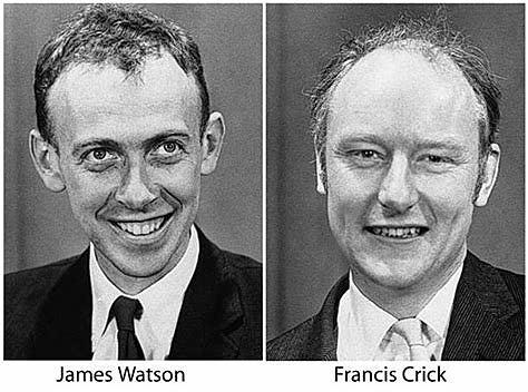 J. Watson i F. Crick