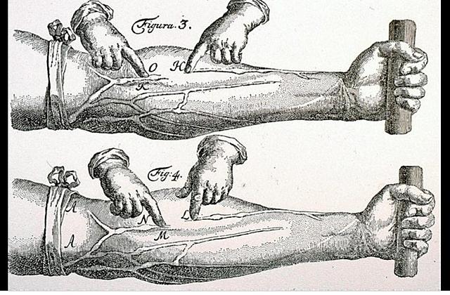 Circulació sanguínia (Harvey)