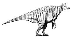 Coritosaure
