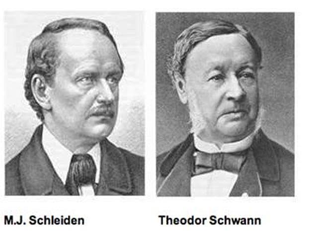 J Schleiden y T Schwann