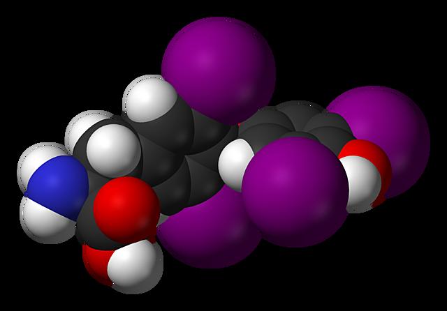 Calvin Kendal aisló la hormona tiroidea.