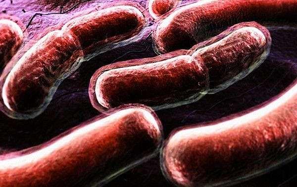 Robert Koch descubrió el bacilo de la tuberculosis.