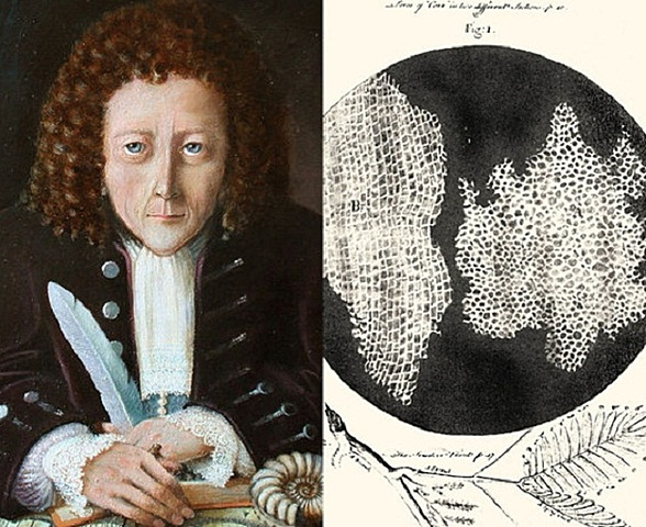 robert hooke's discovery of cells