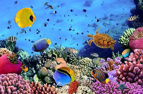 La ecología acuática