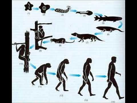 Mecanismo de Darwin