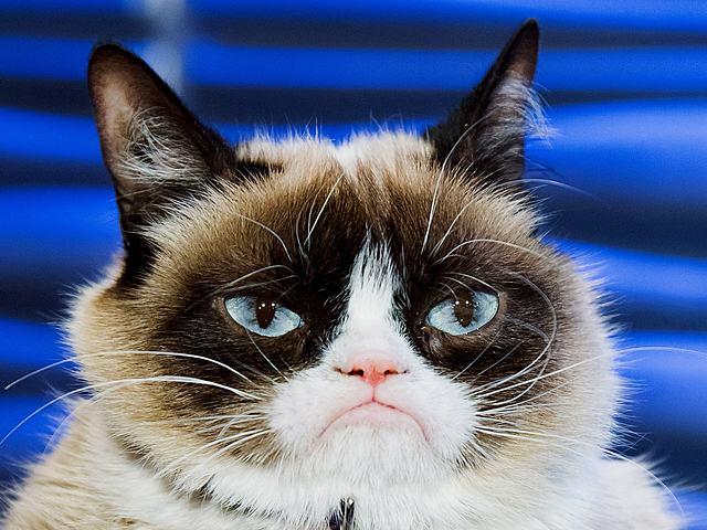 Grumpy Cat (RIP)