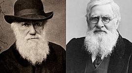 Principales aportaciones de Darwin y Wallace timeline