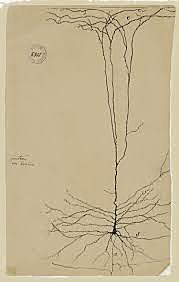 Santiago Ramón y Cajal y la neurona