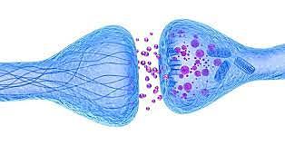 Nuevos hallazgos en función de las neuronas