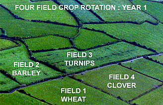 (Charles) Turnip townshend four crop rotation system