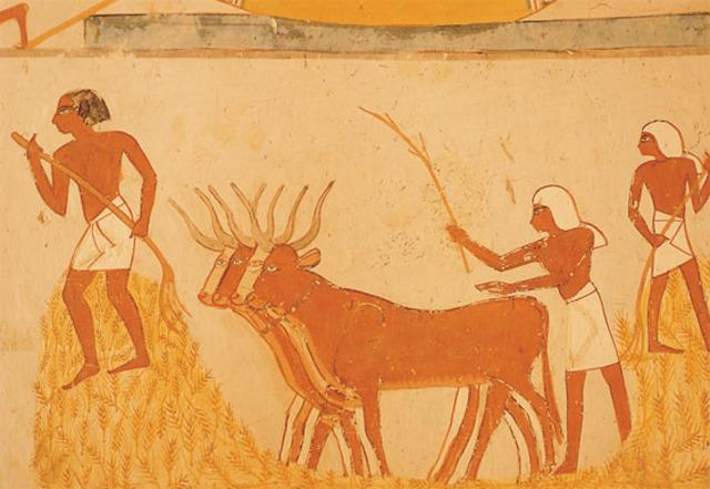 Cultivo del trigo