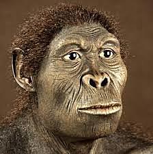 Homo habilis. Parte 1