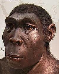 Homo erectus. Parte 1