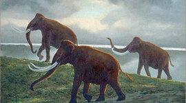 Quaternary Period timeline