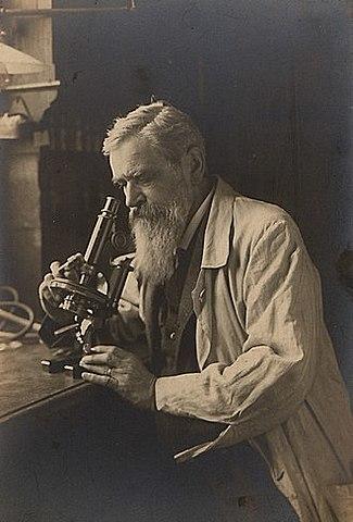 Otto Bütschli (1848-1920, zoologiste allemand)