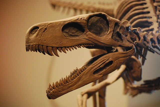 Earliest Dinosaur