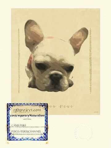 Canis Fuki