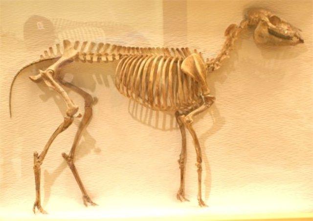 Oligocene Horse