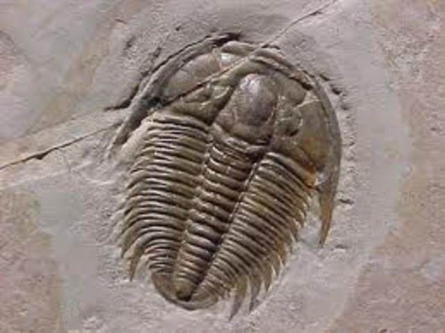 First Arthropods With Mineralized Carapace (Trilobites)