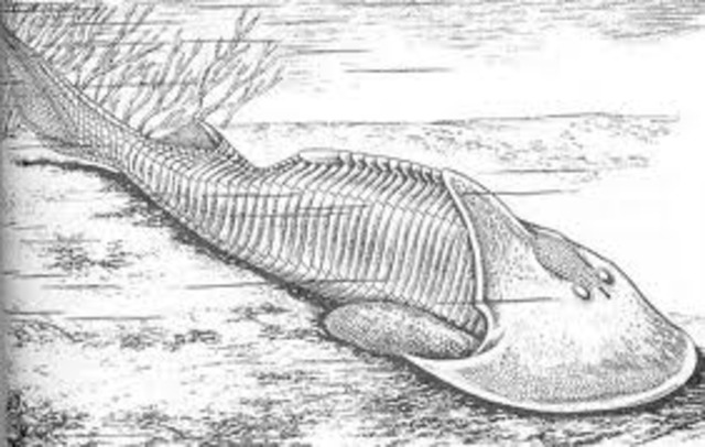 Earliest Vertebrates Appear