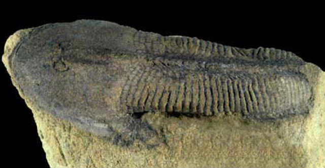 First Jawed Fish Evolved