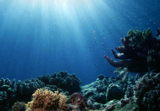Large Coral Reefs Formed