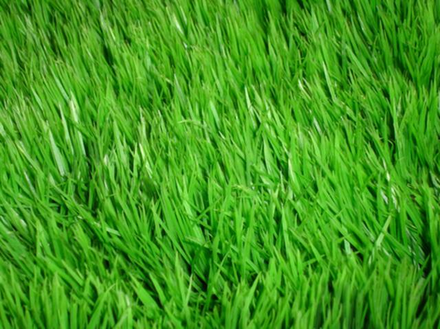 mastodon, grasses