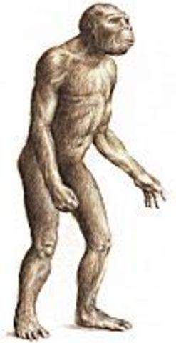 australopithecine