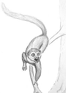 Evolución de los mamíferos