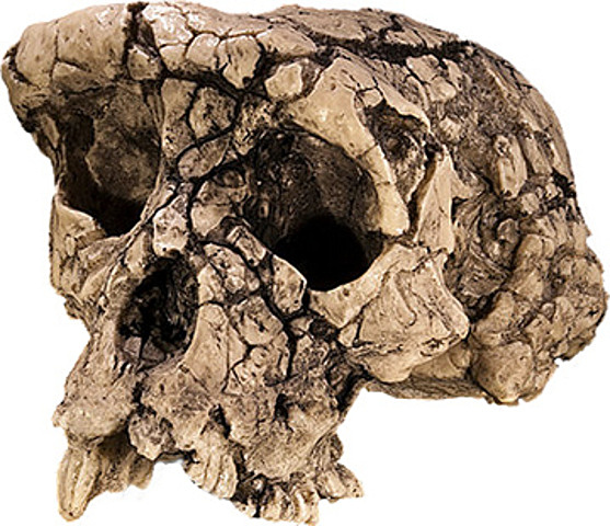 Evolución de los primeros primates