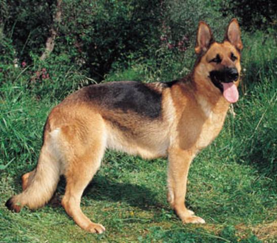 When my one of my best dog died