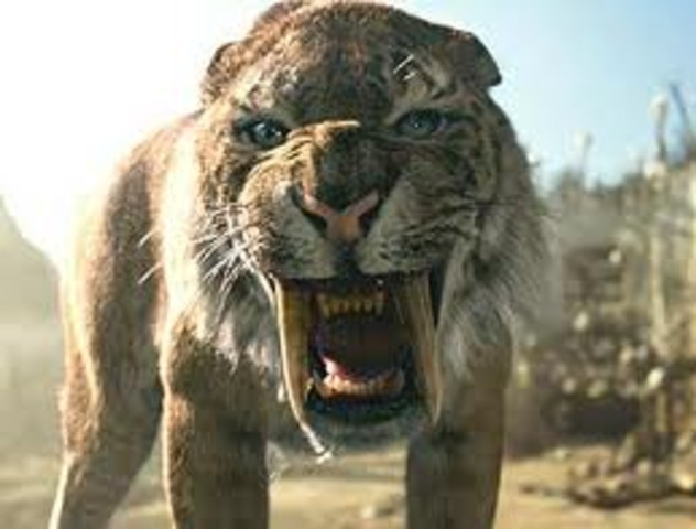 Saber-toothed tigers extinct