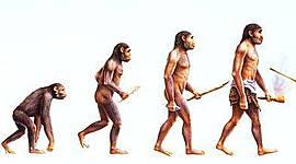 Processo evolutivo do Homem timeline
