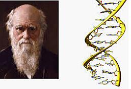 Charles Darwin puts forward the theory of evolution