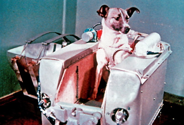 Sputnik II launches with dog as passenger