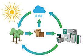 Impacto en la biomasa energética