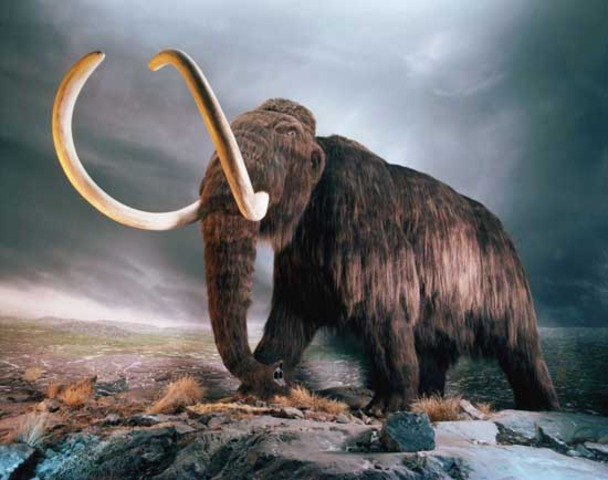 I moved to Siberia and discovered a frozen wooly mammoth