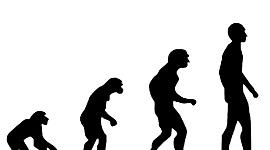 Espècies evolució humana timeline