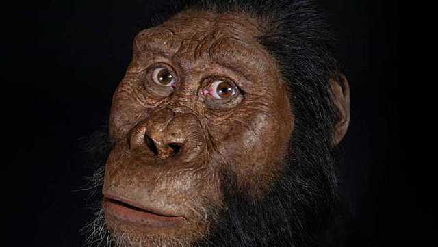 Els Austrolipithecus