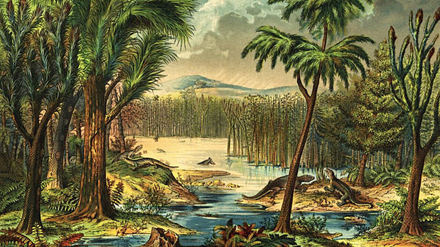 Bosques de helechos gigantes