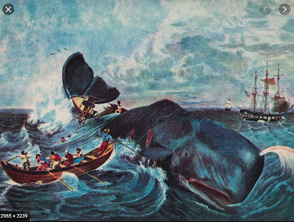 American and French ships sailed North from Hawaii to the Gulf of Alaska in search of blubber-laden right whales.