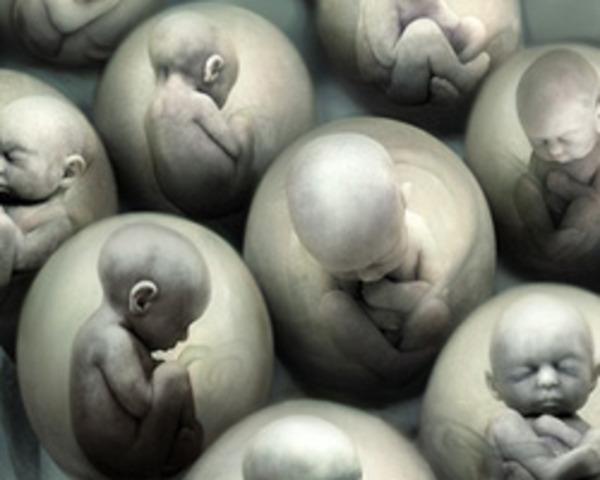 Canada bans human embryo cloning
